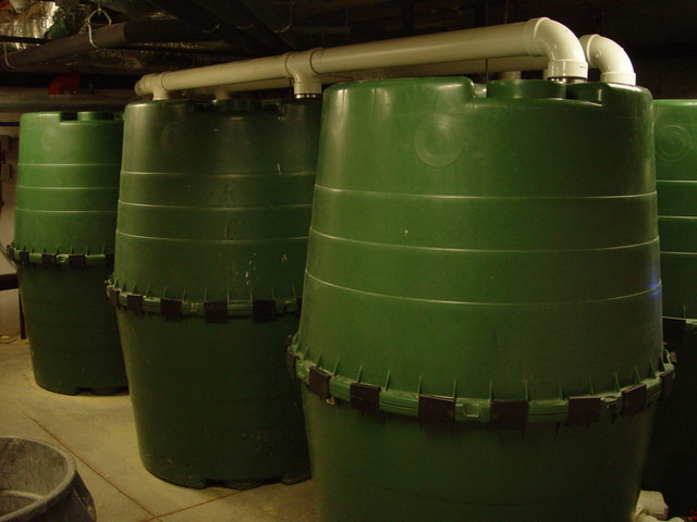 Rainwater harvesting tanks in the basement